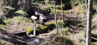 Vattenhålet längs etappen